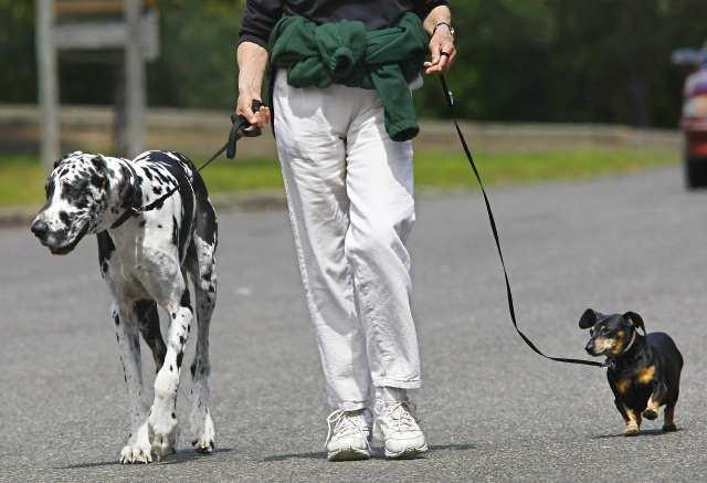 Депутаты предложили поправить закон о домашних животных