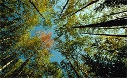 В области отмечают День работников леса