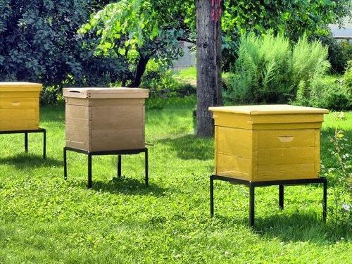 Депутаты разрабатывают закон о пчеловодстве