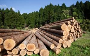 Закон о заготовке древесины рекомендован к принятию